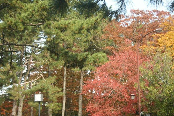 奈良公园赏枫-- 寻访红叶与小鹿的美丽邂逅