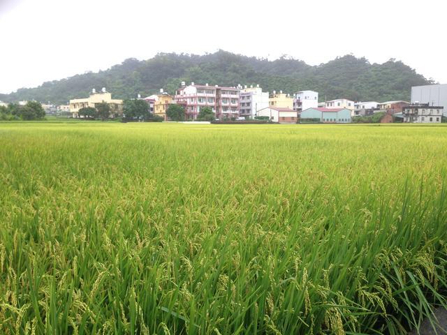 酒香 • 阿罩雾--雾峰农会酒庄与台湾地酒「初雾」、和光复新村